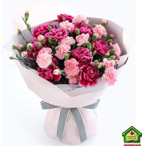 母爱--紫红色康乃馨9枝,粉色多