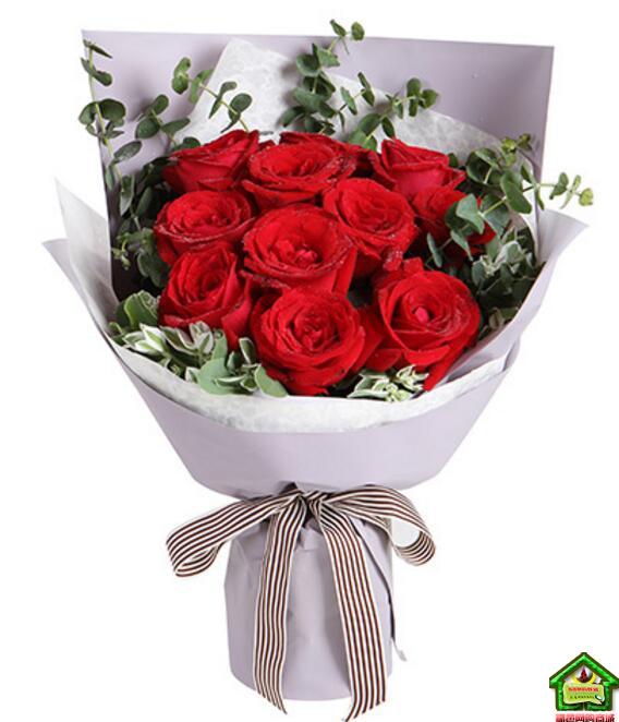 真的爱你--红玫瑰11枝