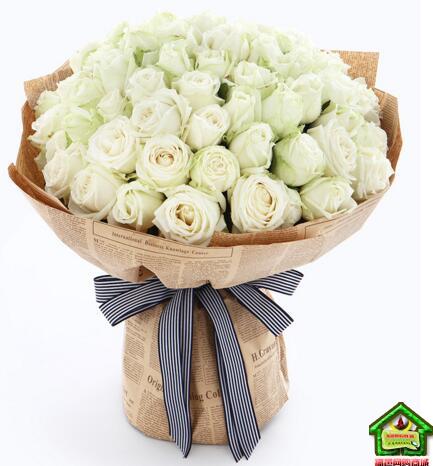 爱你如初--雪山白玫瑰66枝