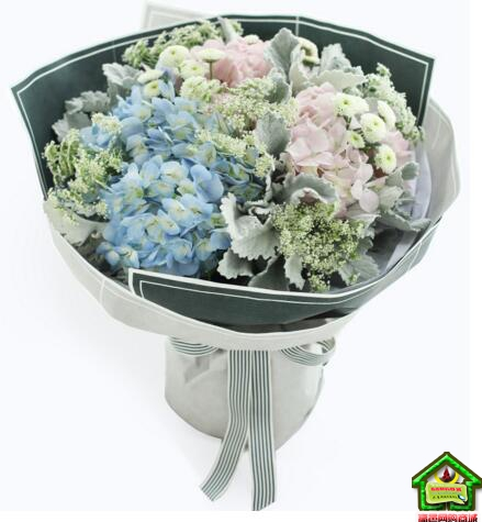 处女座守护花--浅蓝绣球1枝、浅粉绣球1枝 处女座鲜花定制款