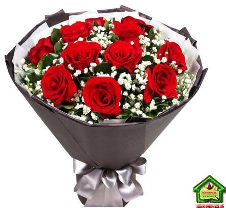 挚爱的人----精品红玫瑰11枝满天星