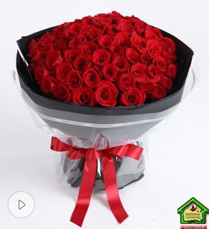 爱的的承诺--99枝红玫瑰