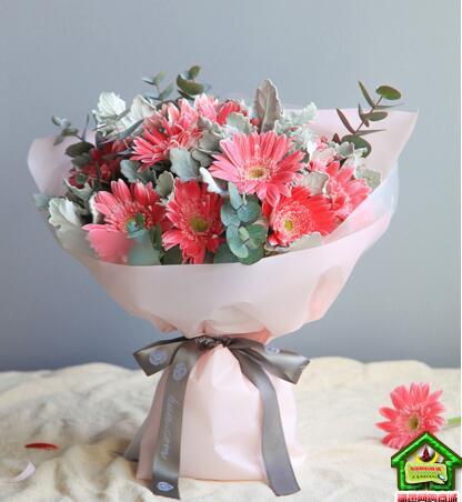 水瓶座守护花--粉色扶郎13枝,银叶菊1扎 水瓶座鲜花定制款