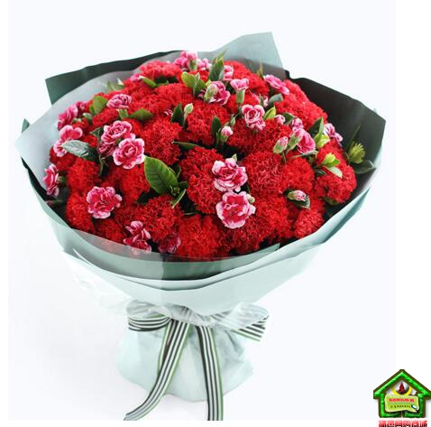 幸福时刻--红色康乃馨66枝,白