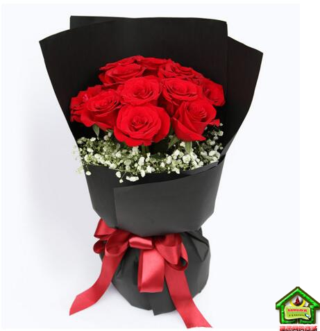 幸福像花儿一样-11枝红玫瑰