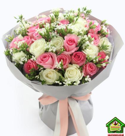 双子座守护花--苏醒玫瑰20枝、雪山玫瑰13枝 双子座鲜花定制款